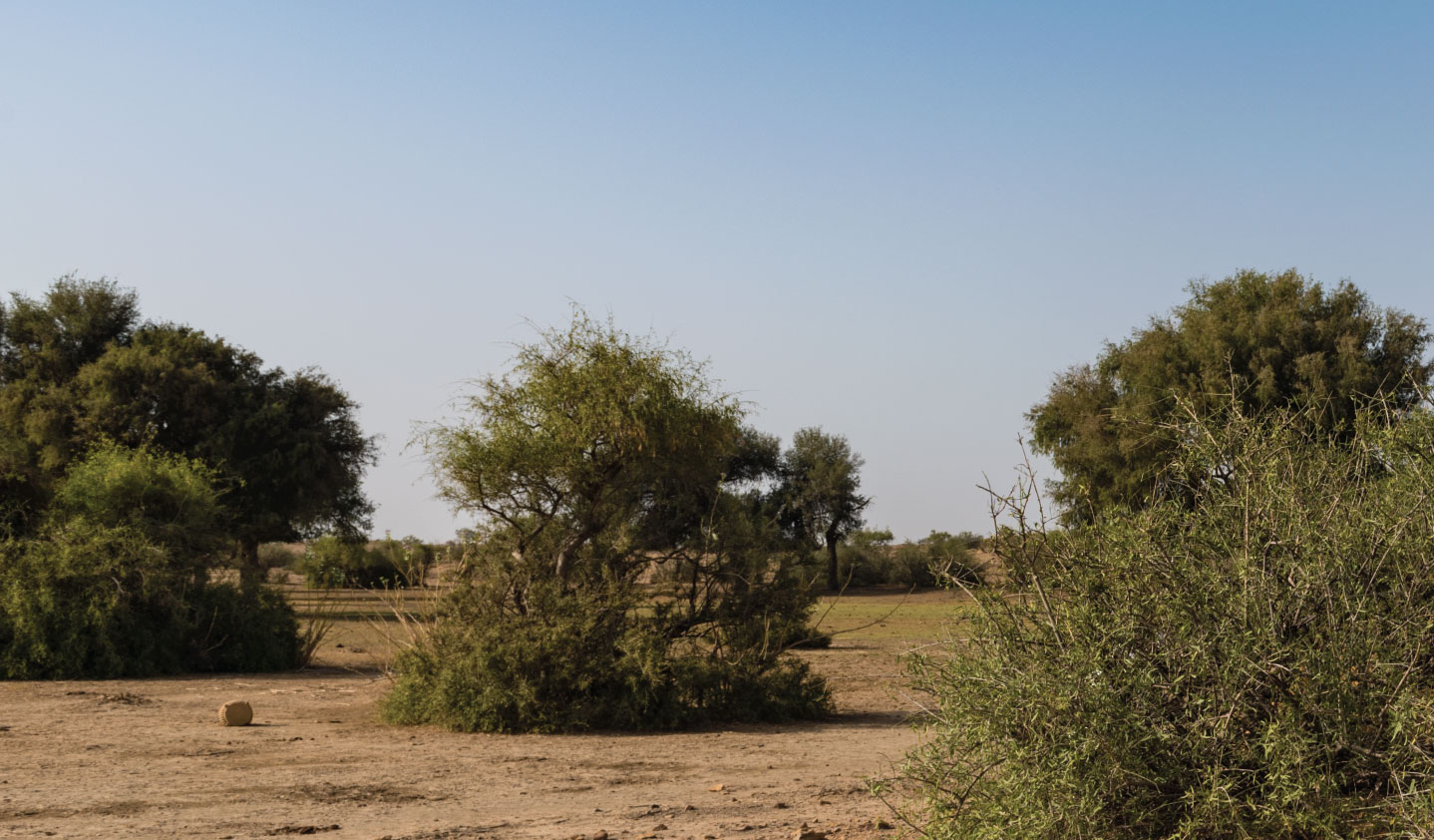 Great Indian Bustard Trail at Suryagarh, Jaisalmer