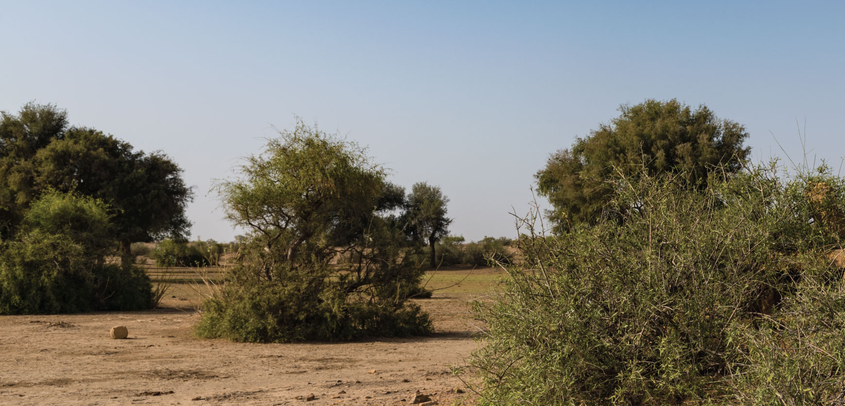 The Desert National Park – The Great Indian Bustard Trail